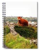 Connemara Cow Spiral Notebook