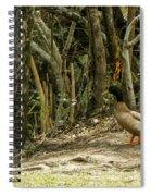 Contimplating A Swim Spiral Notebook