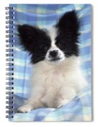 Continetal Toy Spaniel Or Papillon Dog Spiral Notebook