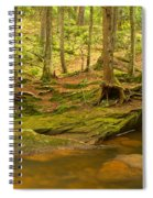 Cook Forest Rocks And Roots Spiral Notebook