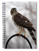 Coopers Hawk Spiral Notebook