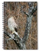 Coopers Hawk 0741 Spiral Notebook