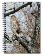 Coopers Hawk 0748 Spiral Notebook