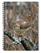 Coopers Hawk 0750 Spiral Notebook