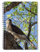 Cooper's Hawk In A Cottonwood Spiral Notebook
