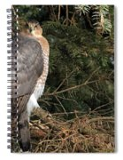 Coopers Hawk In Predator Mode Spiral Notebook