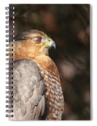 Coopers Hawk In Profile Spiral Notebook