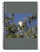 Coopers Hawk In Tree Spiral Notebook