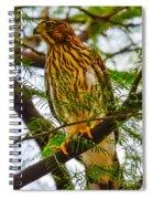 Cooper's Hawk Spiral Notebook