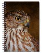 Coopers Hawk Portrait 2 Spiral Notebook
