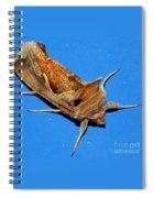 Copper Crest Shield Moth Spiral Notebook