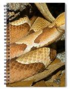 Copperhead Snake Spiral Notebook