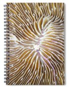 Coral Closeup Spiral Notebook