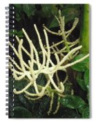White Palm Flower In Costa Rica Spiral Notebook