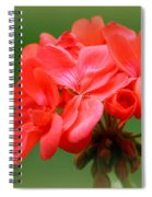 Coral Geraniums Spiral Notebook