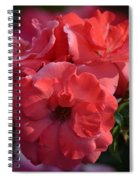 Coral Roses 2013 Spiral Notebook