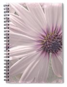 Coreopsis - Dreaming In Pink Spiral Notebook