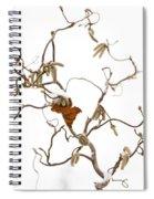 Corkscrew Spiral Notebook