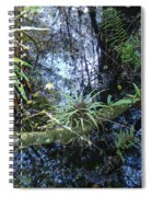 Corkscrew Swamp 16 Spiral Notebook