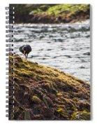 Cormorant - Montague Island - Australia Spiral Notebook