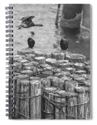 Cormorant Landing Black And White Spiral Notebook