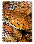 Corn Snake Spiral Notebook