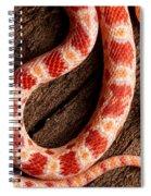 Corn Snake P. Guttatus On Tree Bark Spiral Notebook