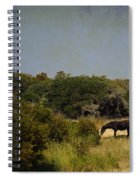 Corolla Pony Spiral Notebook