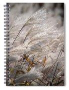 Cortaderia Selloana Spiral Notebook