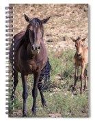 Cortez Colorado Mustangs Spiral Notebook