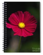 Cosmo In The Red Spiral Notebook