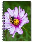 Cosmos 3 Spiral Notebook