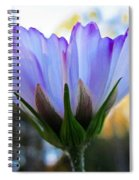Cosmos Petals Up Spiral Notebook