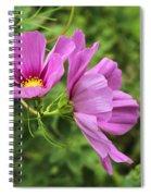 Cosmos Tickles Me Pink - Cosmos Caudatus Spiral Notebook