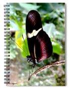 Costa Rican False Postman Butterfly Spiral Notebook