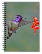 Costas Hummingbird At Flower Spiral Notebook