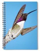 Costa's Hummingbird In Flight Spiral Notebook