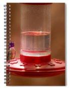 Costa's Hummingbird Keeping Guard Spiral Notebook