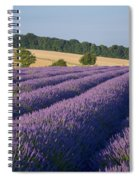 Cotswolds Lavender Spiral Notebook