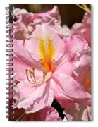 Cotton Candy Azalea Spiral Notebook