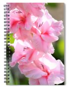 Cotton Candy Gladiolus Spiral Notebook