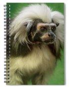 Cotton-top Contemplation Spiral Notebook