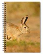 Cottontail Rabbit Spiral Notebook