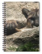 Cougar Spotted Me Spiral Notebook