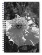 Coulter's Matilija Poppy 2 Spiral Notebook