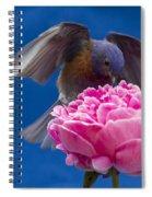 Count Bluebird Spiral Notebook