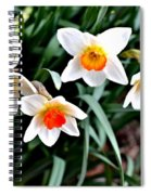 Covenant Daffodils Spiral Notebook
