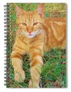 Covered In Orange Spiral Notebook