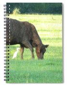 Cow And Friend Abstract Spiral Notebook