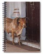 Cow At Church At Colva Spiral Notebook